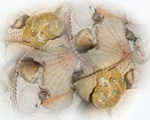 Soft Sea Shell Background Composition poster
