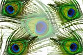 Peacock Feather Eyes Background
