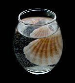 Transparent Glass With Mineral Water And Sea Cockleshell