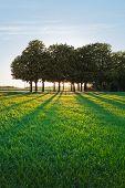 A summer landscape