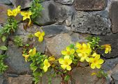 Flowers In Rock