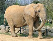 Zoo Animal elephant