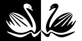 Swans in black and white.