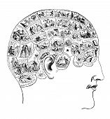 Vintage Phrenology Illustration
