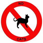 Forbidden cats