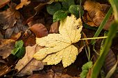 Waterdrops On The Fallen Yellow Leaf After The Rain Among Faded Autumn Leaves poster