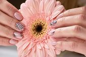 Female Hand Holding Gerbera Flower. Beautiful Female Hand With Beige Manicure Holding Peach Color Ge poster