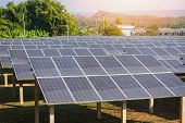 View Of Solar Panels In The Solar Farm With Green Tree And Sun Lighting Reflect / Solar Cell Energy  poster