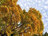 Autumn Crone And Sky