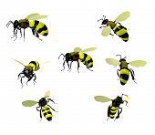 Wasps, Isolated On White Background