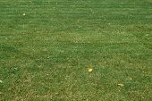 The Surface Of A Lawn Or Lawn With Trimmed Green Grass. A Few Yellowed Autumn Leaves Lie On The Gras poster