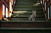 Adorable Striped Cat Walking On Street. Cute Domestic Animal On Tiles. Playful Pet Wandering Outdoor poster
