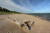 Driftwood on Beach - Lake Huron, Ontario, Canada