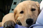 Comfy Puppy