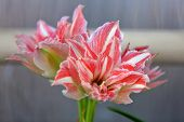 Bright Bloom Of A Winter Flower In A Greenhouse poster