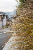 Plant With Blurred Background Of Bukchon Hanok Village, A Korean Traditional Village In Seoul, South poster
