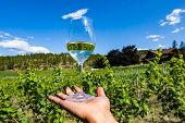 Glass Of Clear Pale White Wine On Hand Selective Focus Against Okanagan Valley Winery Vineyards With poster