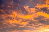 A Flock Of Birds On A Background Of Bright Orange Cumulus Clouds In The Sky At Sunset poster