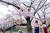 Two Women Wear Traditional Japanese Kimono Or Yukata, Women Behind While Sightseeing Sakura In Sakur poster