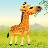baby Animal Sammlung: Giraffe