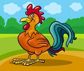 Rooster Farm Animal Cartoon Illustration