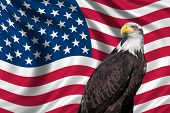 Usa Flag With Bald Eagle