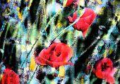 Fundo floral com flores vermelhas de papoulas. Convite, cartão ou capa de livro.