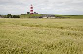 Lighthouse In Happisburgh Norfolk Uk