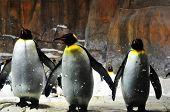 We are three Penguins