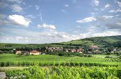 Alsace Landscape And Vinewyard