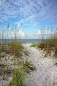 stock photo of sea oats  - Beach path through white sand dunes and sea oats leads to calm ocean on a summer morning.