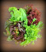 Green and red lettuce on a table