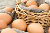stock photo of bird egg  - Close - JPG