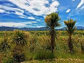 New Zealand Native Plants In Vineyard