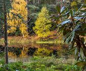 Moray Autumn water garden