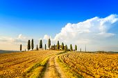 Tuscany, Farmland, Cypress Trees And White Road. Siena, Val D Orcia, Italy.