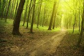 grüne Sommer Wald