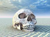 Human Skull in a Desert Landscape