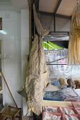 Dried Shark For Sale
