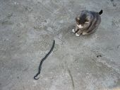 Cat And A Snake