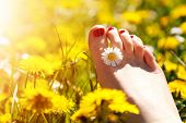 Foot of a young woman with a spring flower in fingers lying on sunny, warm meadow. Happiness, harmon