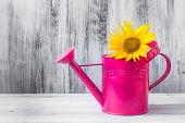 Still Life Bouquet Sunflowers Watering Can
