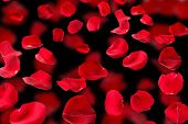 Beautiful red rose petals on dark background