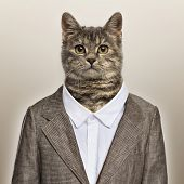 European Shorthair wearing a suit in front of a beige background