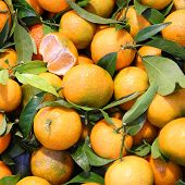 picture of valencia-orange  - Fresh fruit at a market in Valencia - JPG