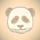 Sketch Head Of Panda, Vector Background