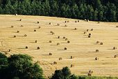 Bales Of Hay On Harvested Agriculture Field