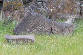 Native Indian Mythical Animals Petroglyph