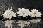 spa concept �¢�?�?gardenia flower with zen stone