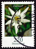 Postage Stamp Germany 2006 Edelweiss, Flowering Plant